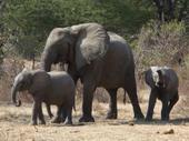 Baby_elephants