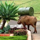 Warthog_on_the_loose